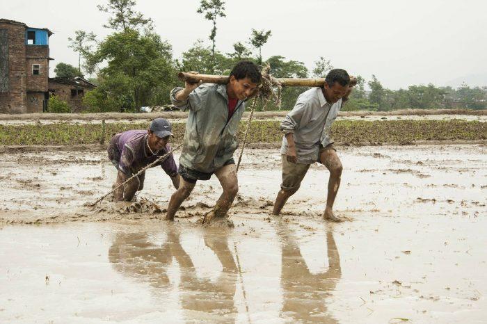 Human Efforts Men At Work Mud Seeding Water Nepal