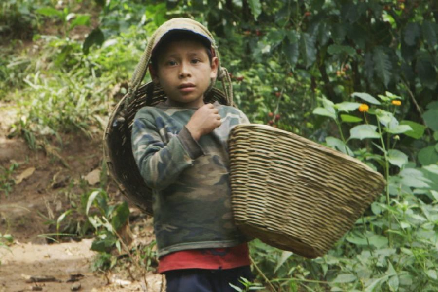 Child and forced labor - The Human Cost of Coffee (Photo: The Weather Channel‏)