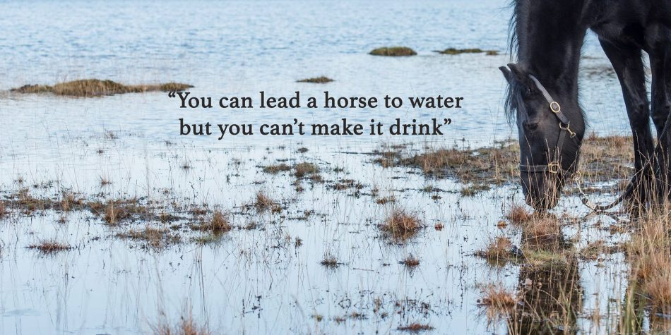 'You can lead a horse to water but you can't make him drink'